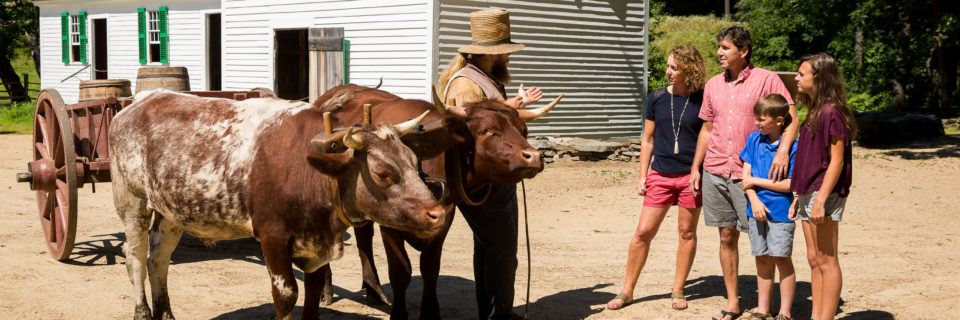 A family visits with a team of oxen