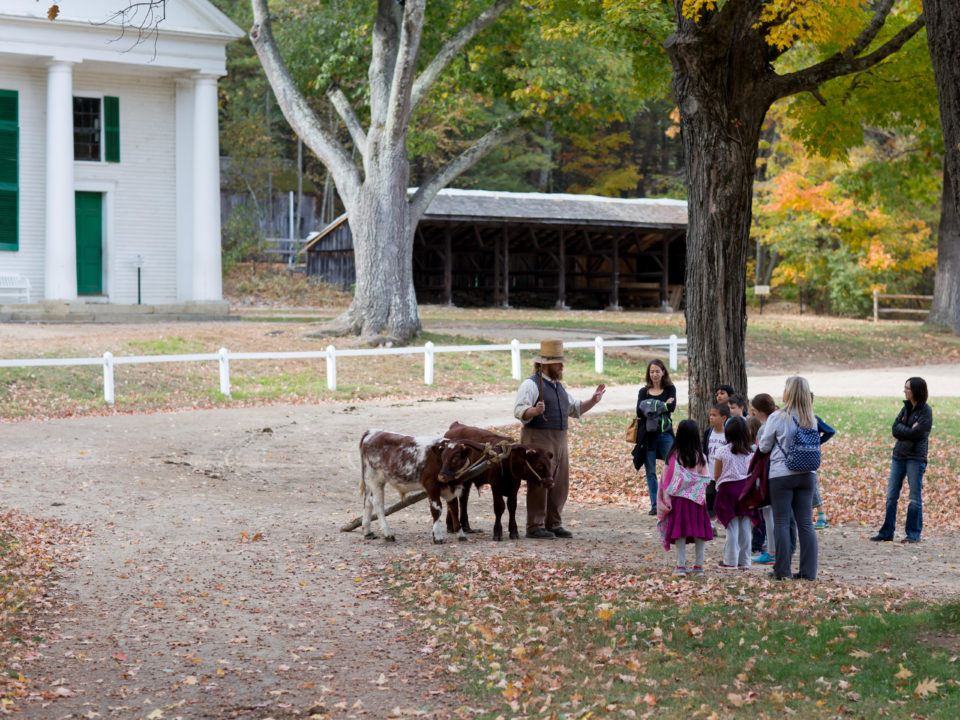 Students on a field trip meet a team of young oxen in training