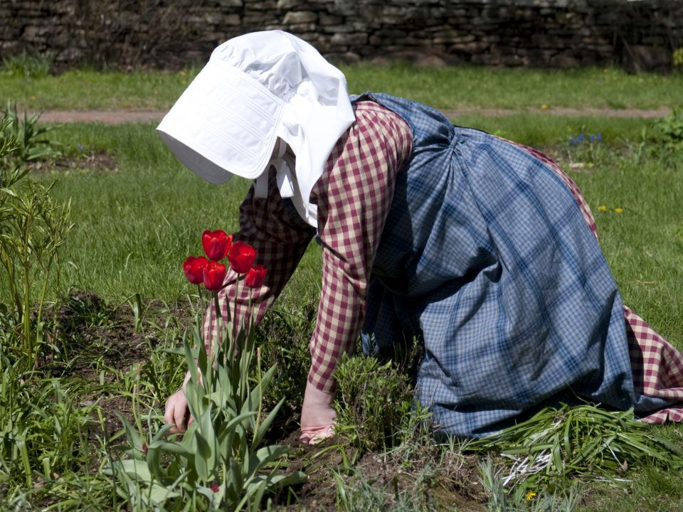 A costumed gardner tends the tulips in the Salem Towne Garden in spring