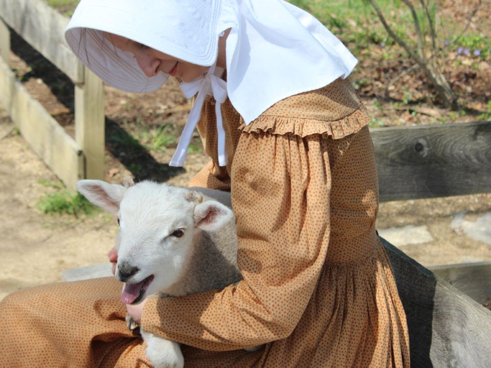 A costumed historian holds a spring lamb