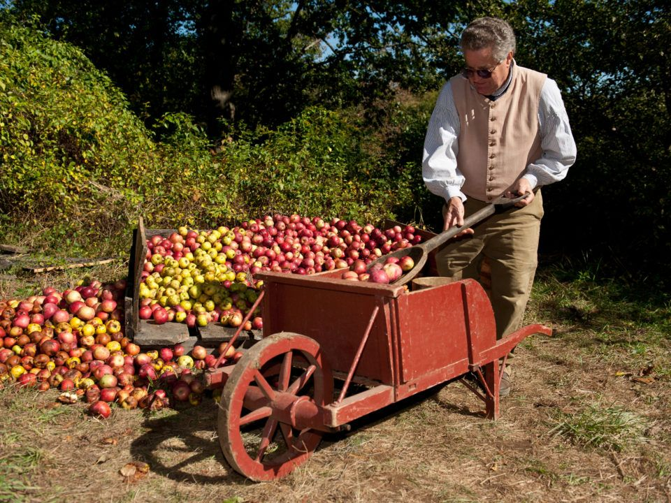 A costumed historian with the apple harvest