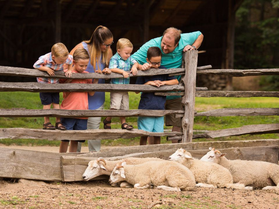A family looks at the sheep by the Fenno barn