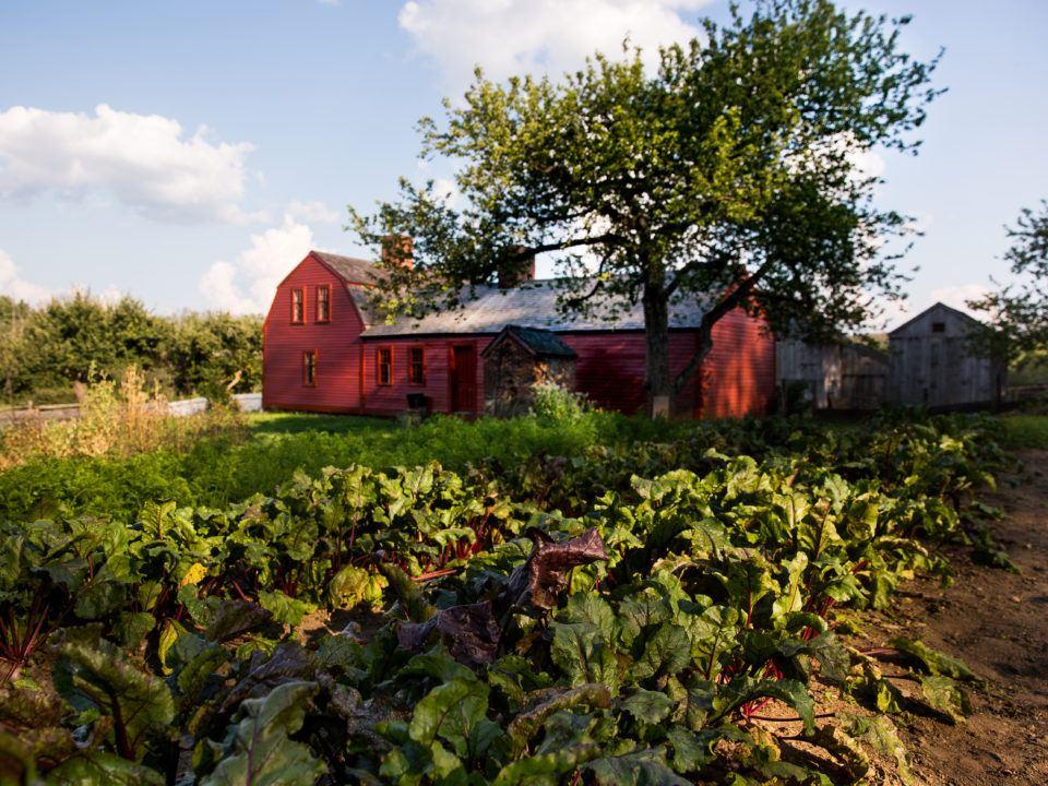 Freeman Farm Garden