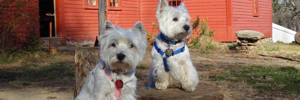 Dogs at Freeman Farm