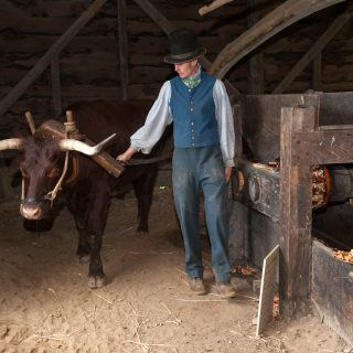 Working the Ox Powered Cider Mill at Old Sturbridge village