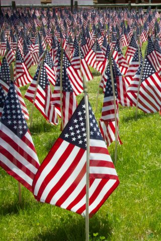 American Flags planted in a field