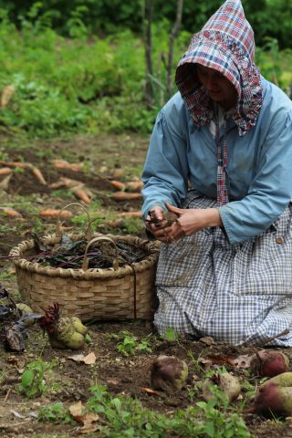 A costumed historian works at harvesting in the Freeman Garden