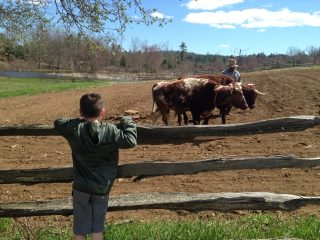 A boy watches a farmer and oxen work in the field