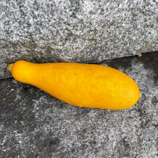 One deep yellow summer squash