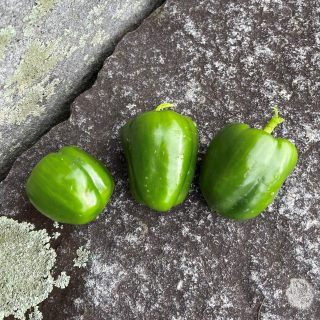 Three green peppers laying on gray stone